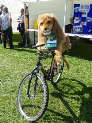 Lions mascot promoting the Wild Boar Challenge